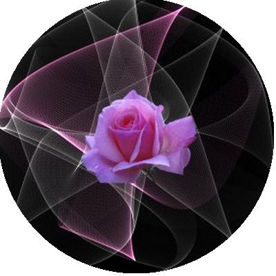 IMAGES FLEURS Fleurs10