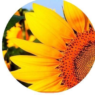 IMAGES FLEURS Fleurs12