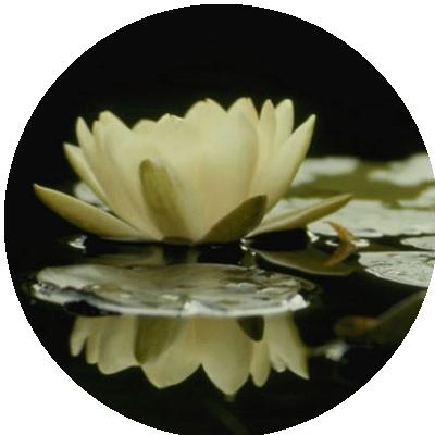 IMAGES FLEURS Fleurs13