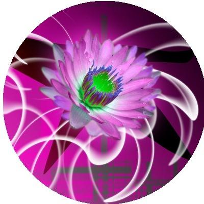 IMAGES FLEURS Fleurs14