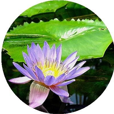 IMAGES FLEURS Fleurs15