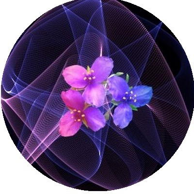IMAGES FLEURS Fleurs16