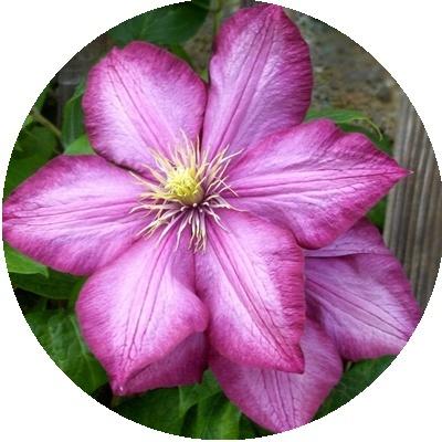 IMAGES FLEURS Fleurs17