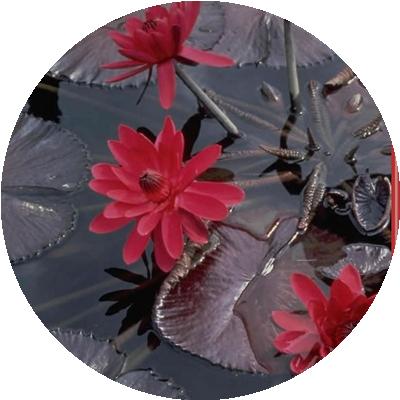 IMAGES FLEURS Fleurs18