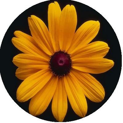 IMAGES FLEURS Fleurs19