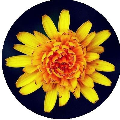 IMAGES FLEURS Fleurs20