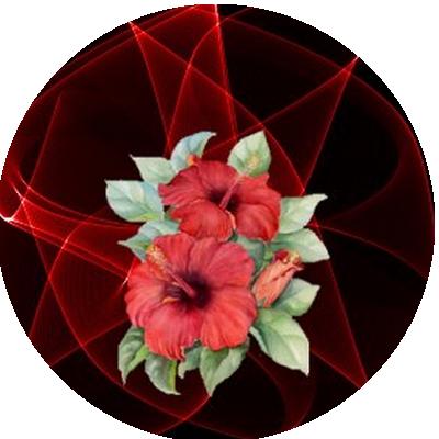 IMAGES FLEURS Fleurs21