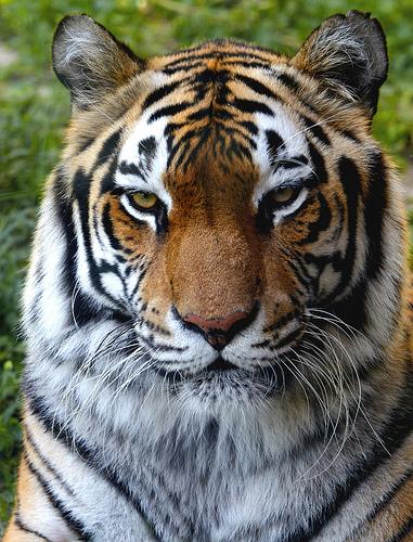 LOS ANIMALES NO HABLAN, PERO.... (Preciosas citas y frases) 43395410