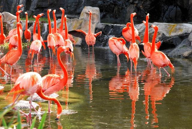 LOS ANIMALES NO HABLAN, PERO.... (Preciosas citas y frases) Flamen10