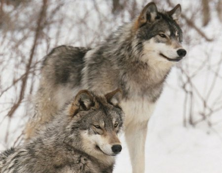 LOS ANIMALES NO HABLAN, PERO.... (Preciosas citas y frases) Fondos11