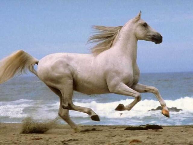 LOS ANIMALES NO HABLAN, PERO.... (Preciosas citas y frases) Horse-10