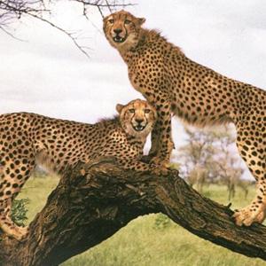 LOS ANIMALES NO HABLAN, PERO.... (Preciosas citas y frases) Imagen10