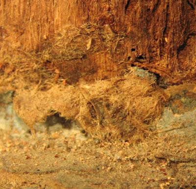 Polychromies anciennes et présence de papier Vierge11
