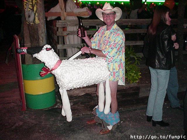 Guzzi pour faire les courses... Sheepf10