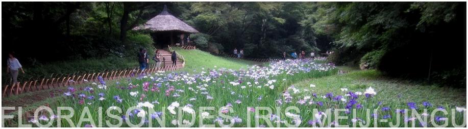 Festivals et événements du mois de juin à TOKYO Florai11