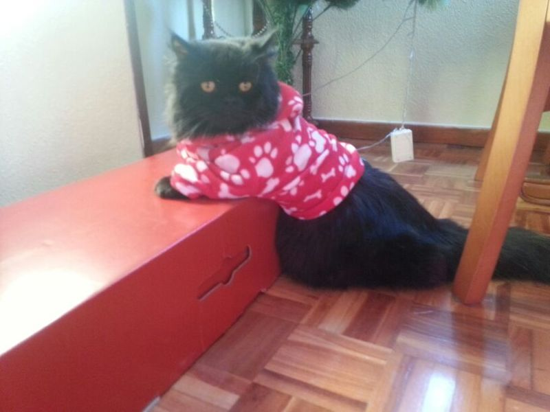Rubi, gatita muy cariñosa abandonada en la calle. Vitoria ¡ADOPTADA! Amigui10