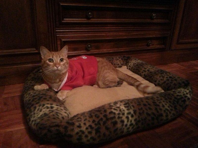 Rubi, gatita muy cariñosa abandonada en la calle. Vitoria ¡ADOPTADA! Rubi10
