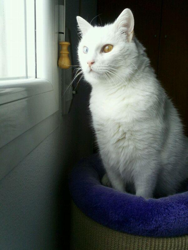 Yuna en su casita Yuna210