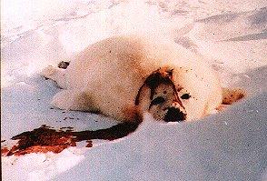 Association Anti chasse Seal310