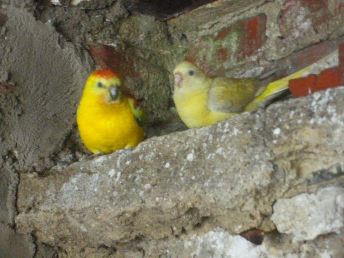 Mes perruches (1 an après) Imgp5210