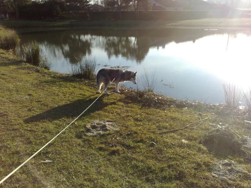 CANDY - femelle husky 12 ans - Asso TAIGA [DECEDEE] - Page 8 09021810
