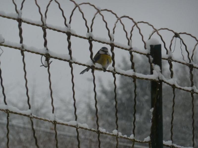 Lundi de neige.... P1020416