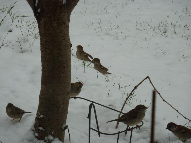 Lundi de neige.... P1020417