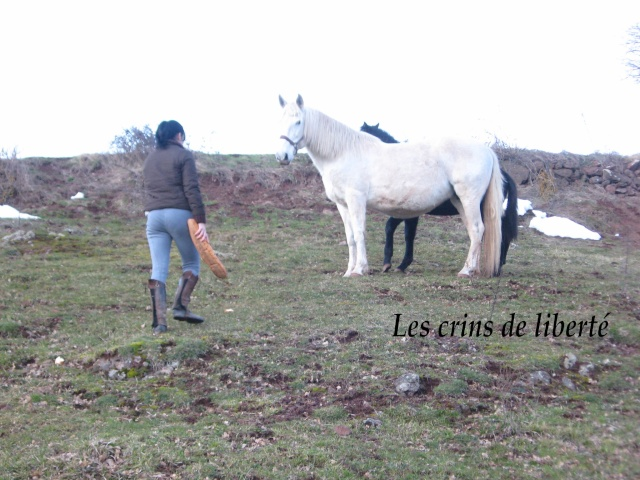 (Dept 43) Chamata, Portugaise PP, sauvée par calamysti (Janvier 2009) Chamat12