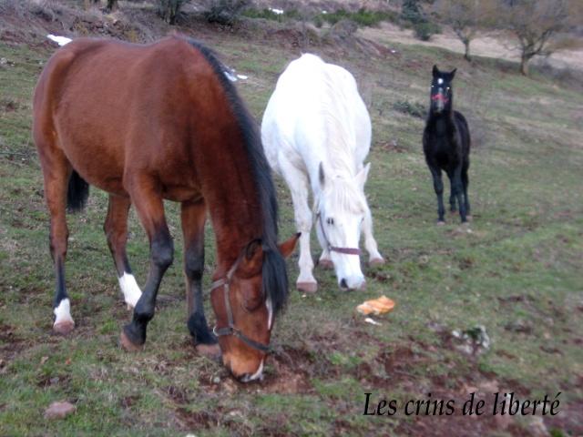 (Dept 43) Chamata, Portugaise PP, sauvée par calamysti (Janvier 2009) Chamat13