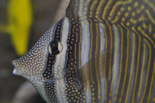 le reef tank d'harold - Page 2 Nikon_51