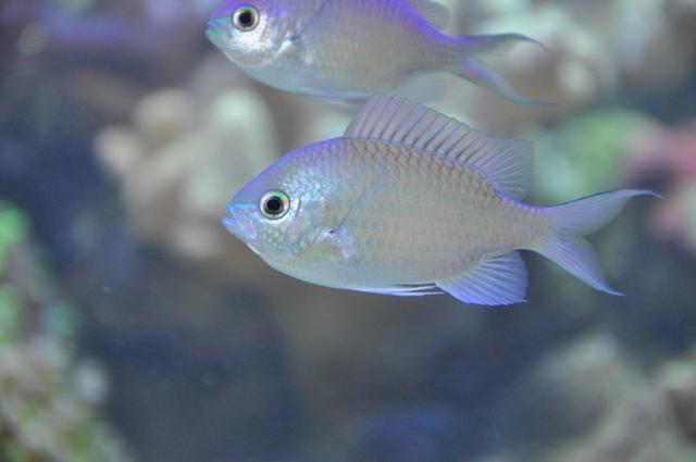 le reef tank d'harold - Page 2 Nikon_52