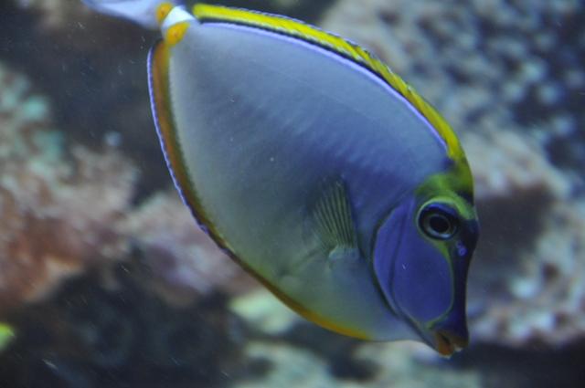 le reef tank d'harold - Page 2 Nikon_53