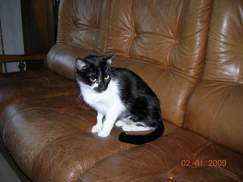 Balkis, femelle stérilisée, Chat l'heureux 62 Dscn3610
