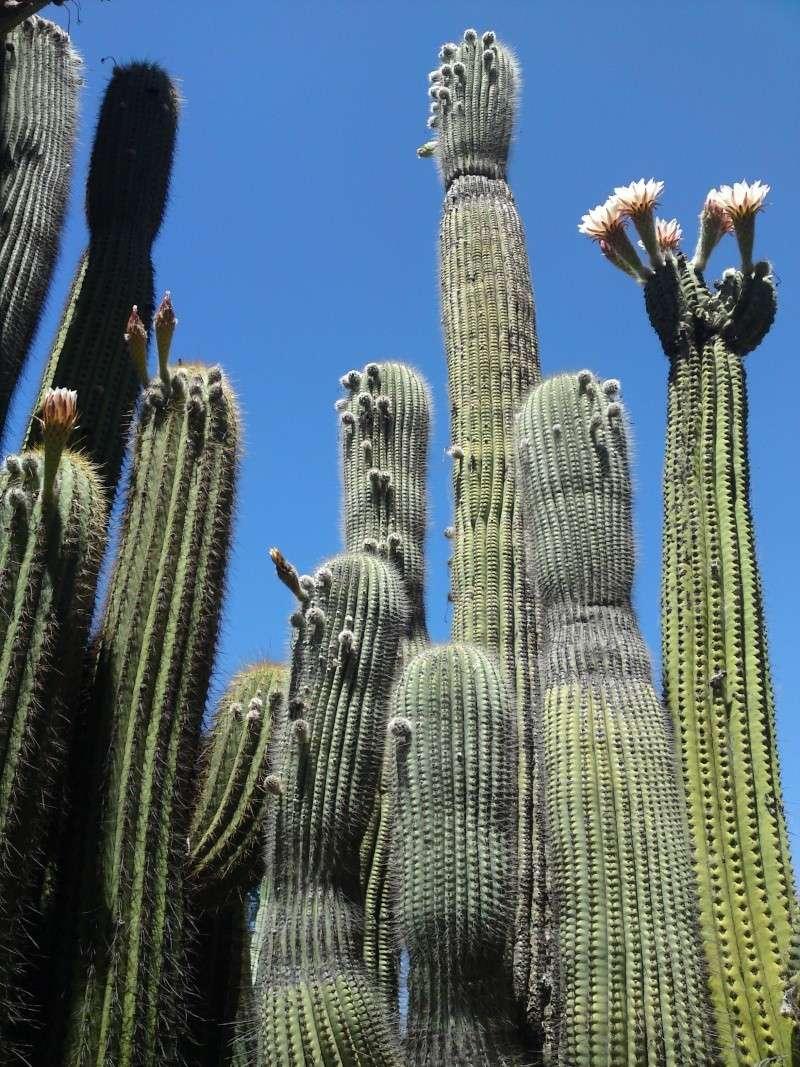 Trip to a Bendigo cactus garden. (Image heavy) Dsc00210
