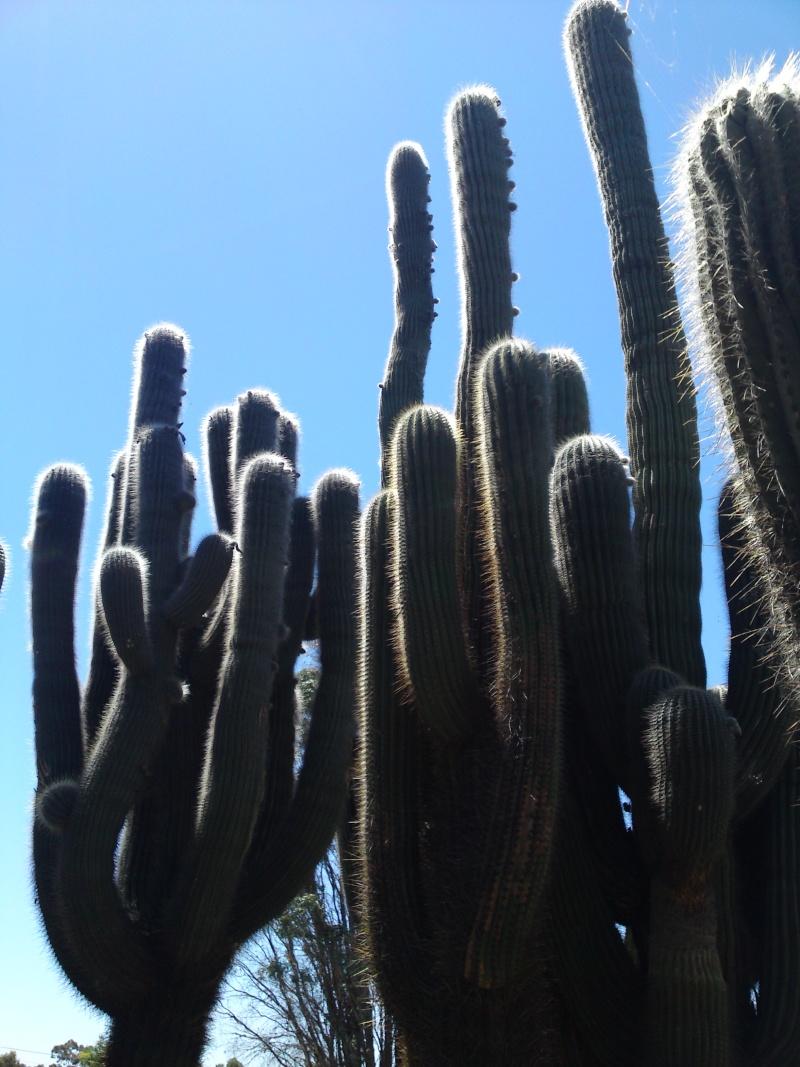 Trip to a Bendigo cactus garden. (Image heavy) Dsc00211