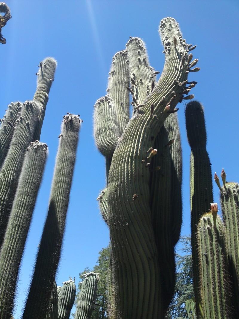 Trip to a Bendigo cactus garden. (Image heavy) Dsc00212