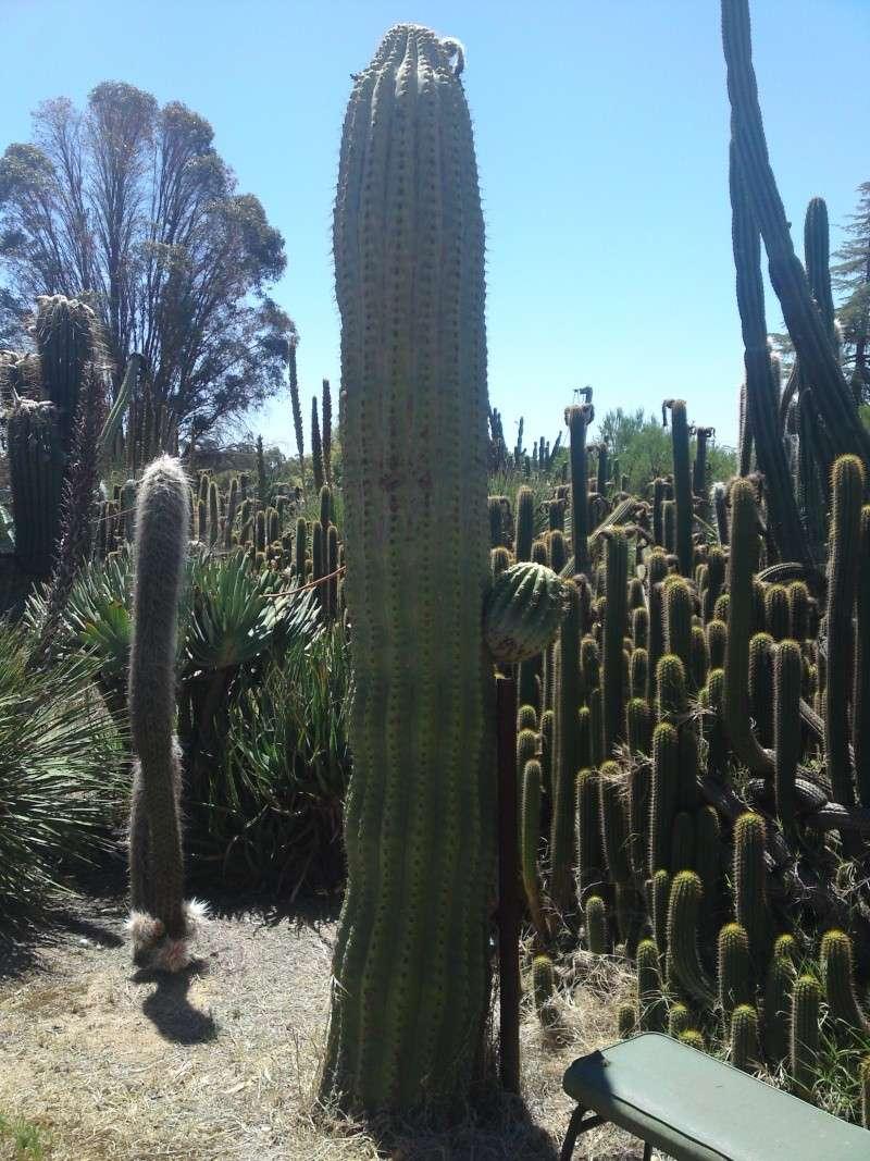 Trip to a Bendigo cactus garden. (Image heavy) Dsc00213
