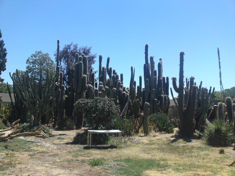 Trip to a Bendigo cactus garden. (Image heavy) Dsc00214