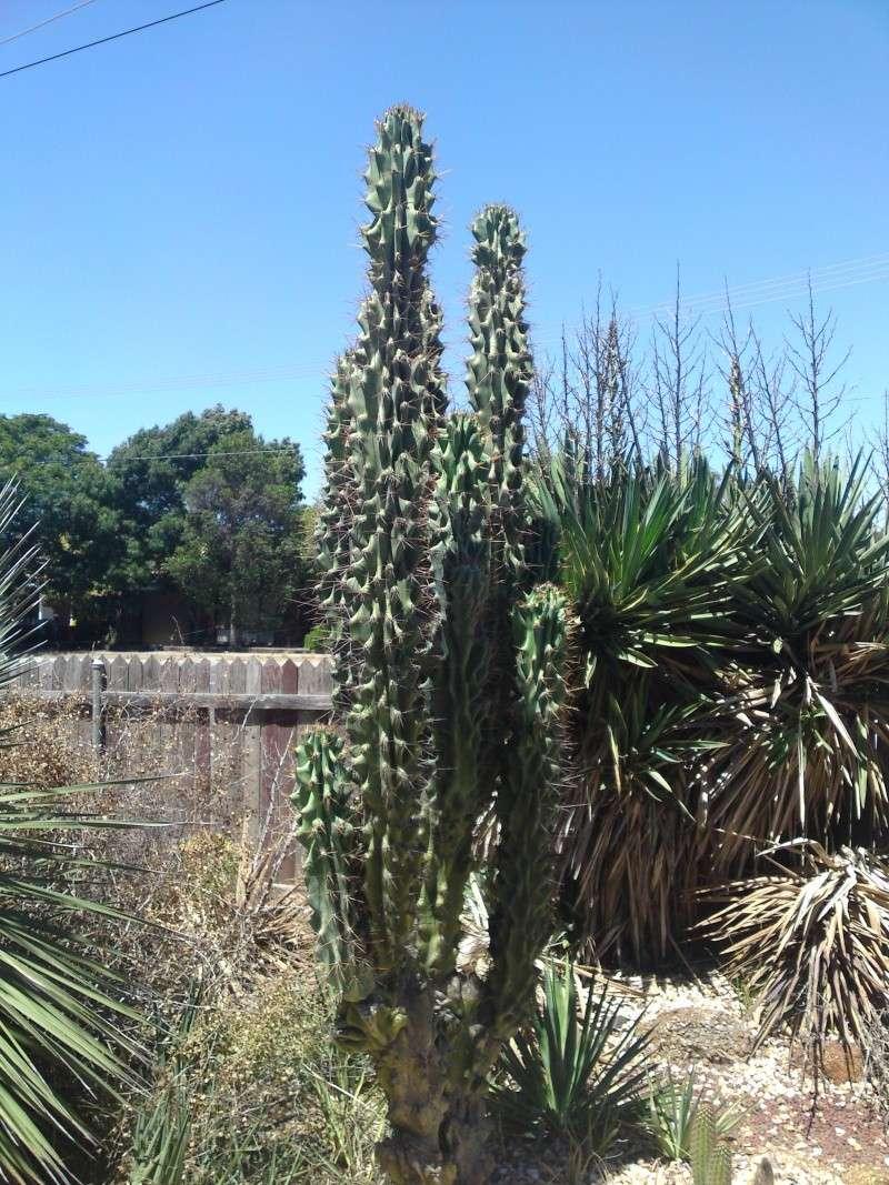 Trip to a Bendigo cactus garden. (Image heavy) Dsc00215