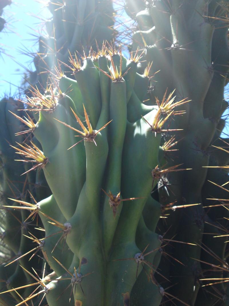 Trip to a Bendigo cactus garden. (Image heavy) Dsc00216