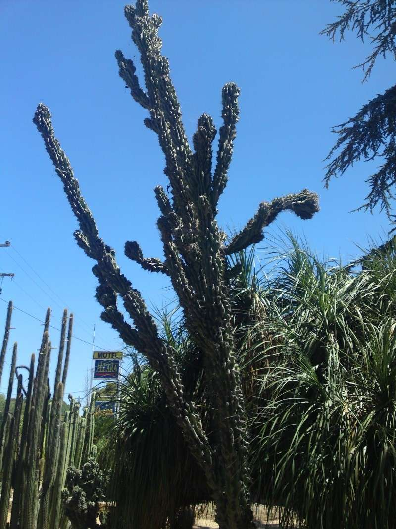 Trip to a Bendigo cactus garden. (Image heavy) Dsc00217