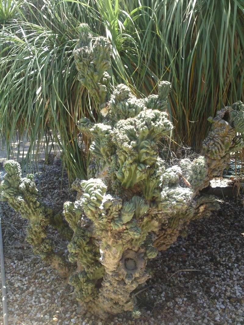 Trip to a Bendigo cactus garden. (Image heavy) Dsc00220