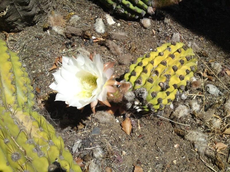 Trip to a Bendigo cactus garden. (Image heavy) Dsc00223