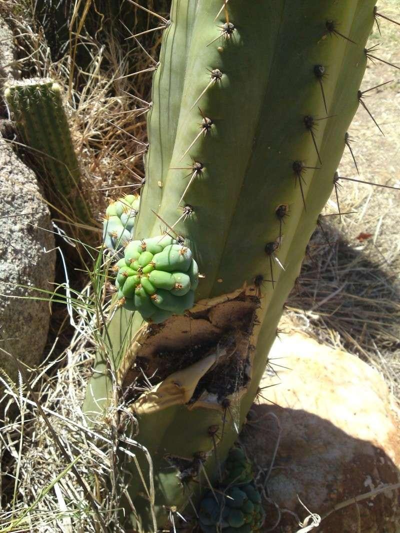 Trip to a Bendigo cactus garden. (Image heavy) Dsc00227