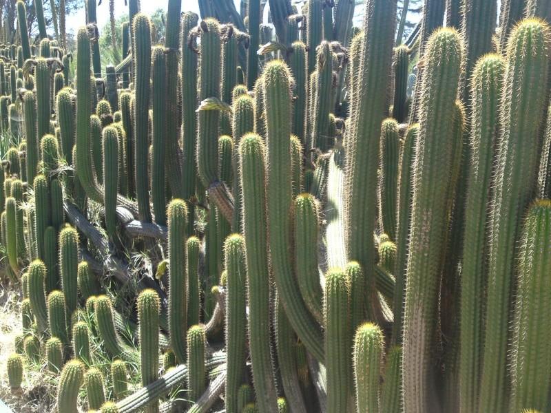Trip to a Bendigo cactus garden. (Image heavy) Dsc00228