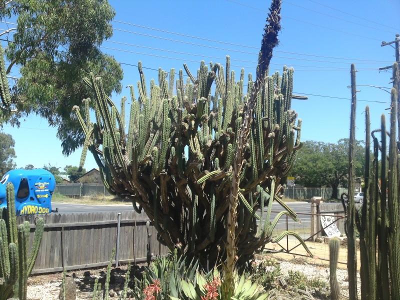 Trip to a Bendigo cactus garden. (Image heavy) Dsc00229