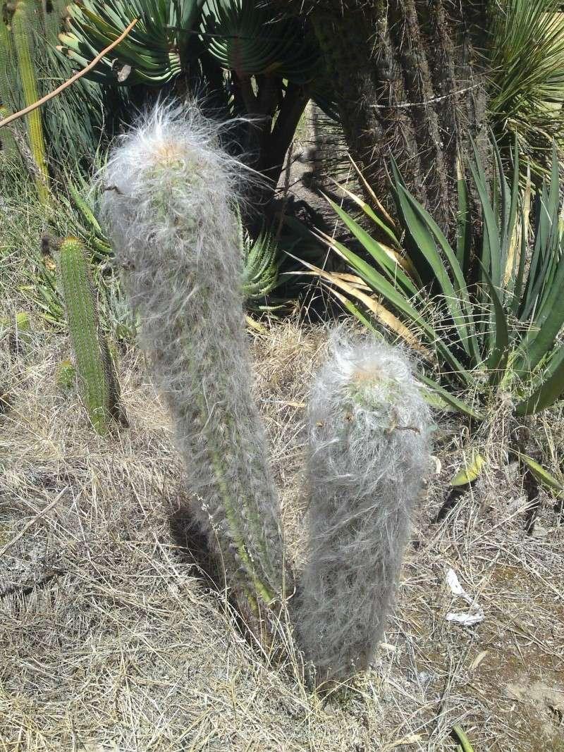 Trip to a Bendigo cactus garden. (Image heavy) Dsc00231