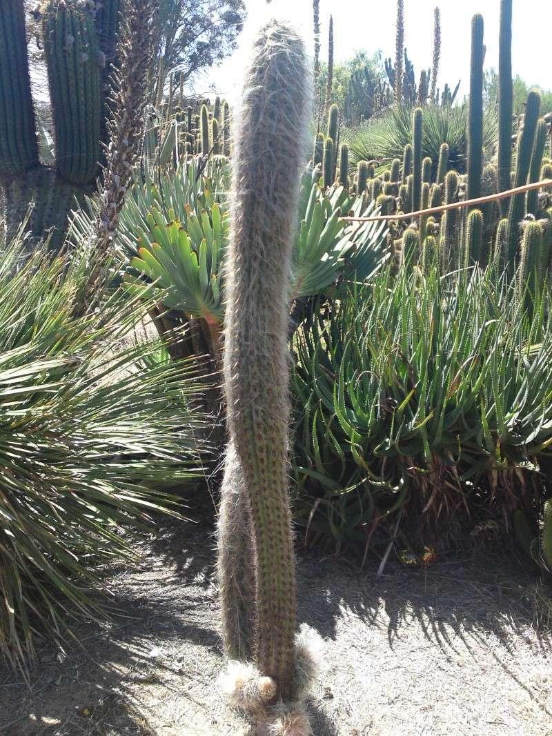 Trip to a Bendigo cactus garden. (Image heavy) Dsc00232