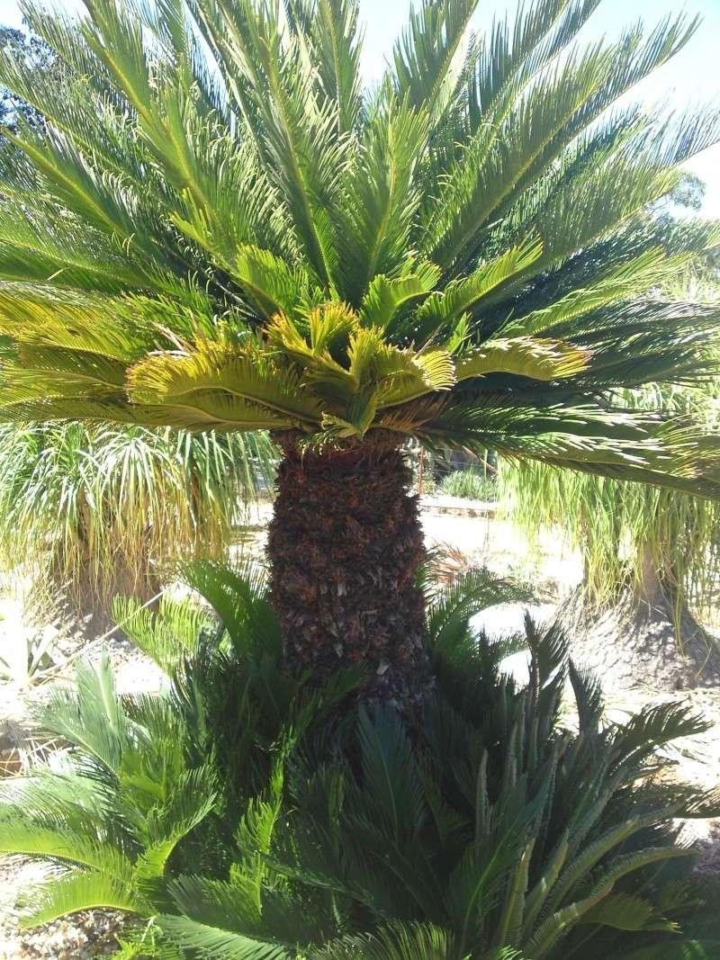 Trip to a Bendigo cactus garden. (Image heavy) Dsc00241