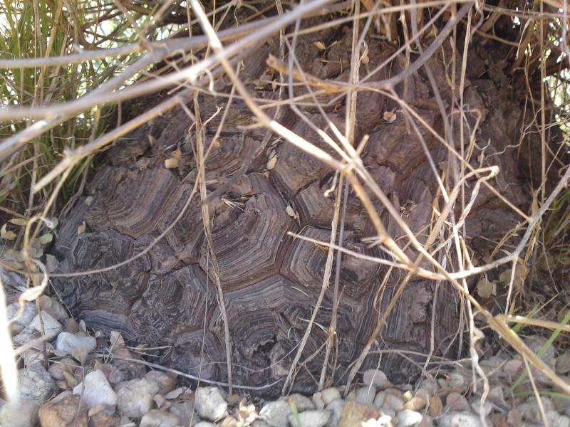 Trip to a Bendigo cactus garden. (Image heavy) Dsc00242